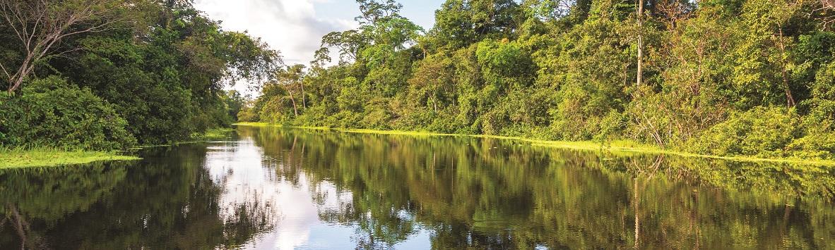 O DESMATAMENTO NA AMAZÔNIA PODE GERAR NOVAS EPIDEMIAS!